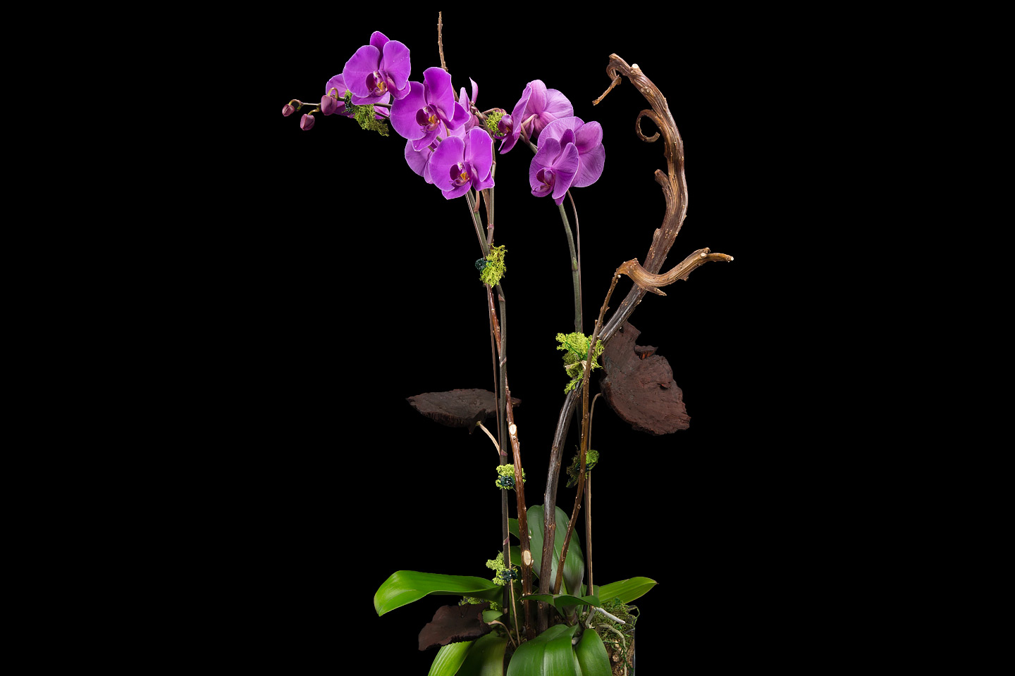 a beautiful, potted hot pink phalaenopsis orchid, photographed by Jacob Rosenfeld