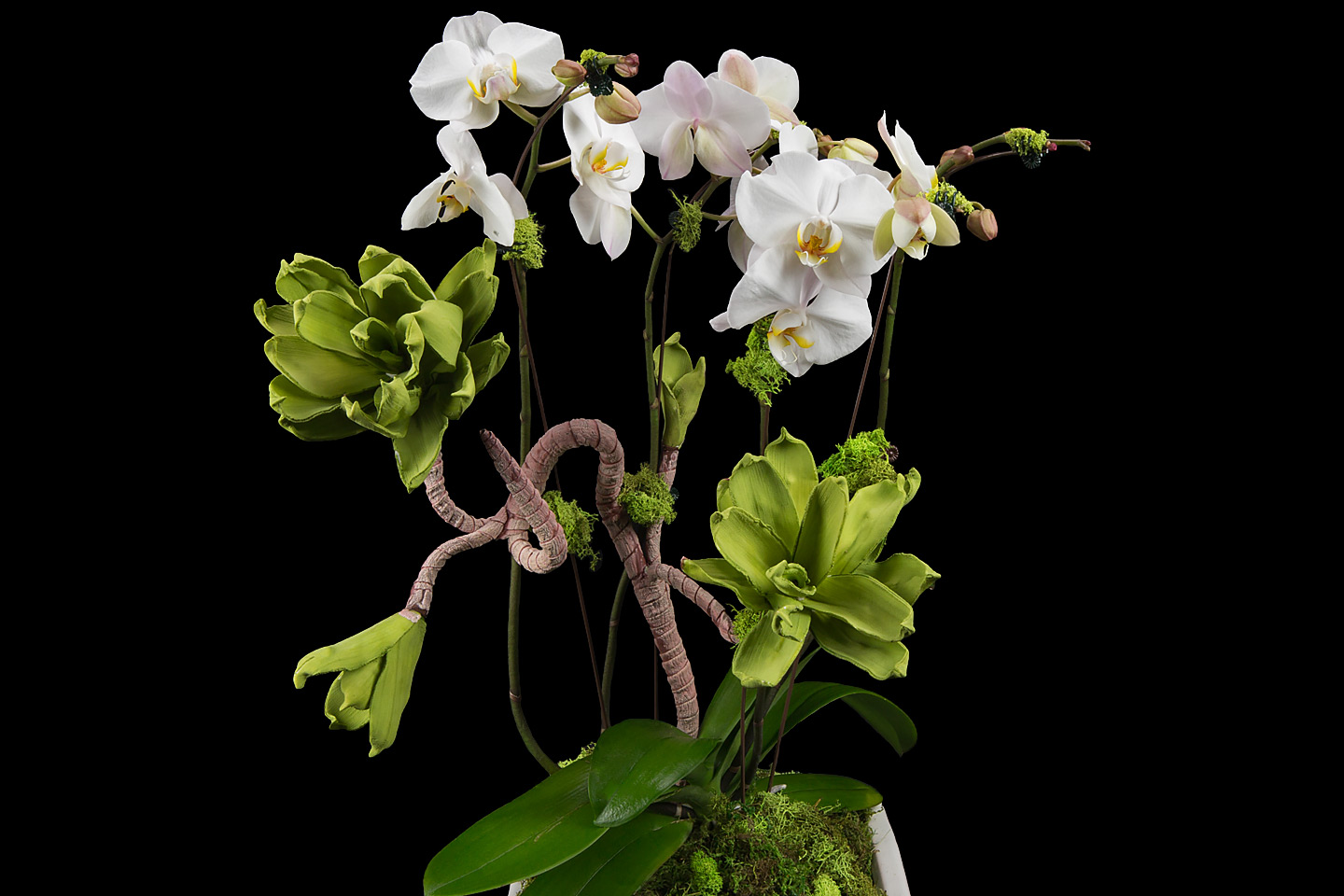 a beautiful potted white phalaenopsis orchid with assorted silk succulents, photographed by Jacob Rosenfeld